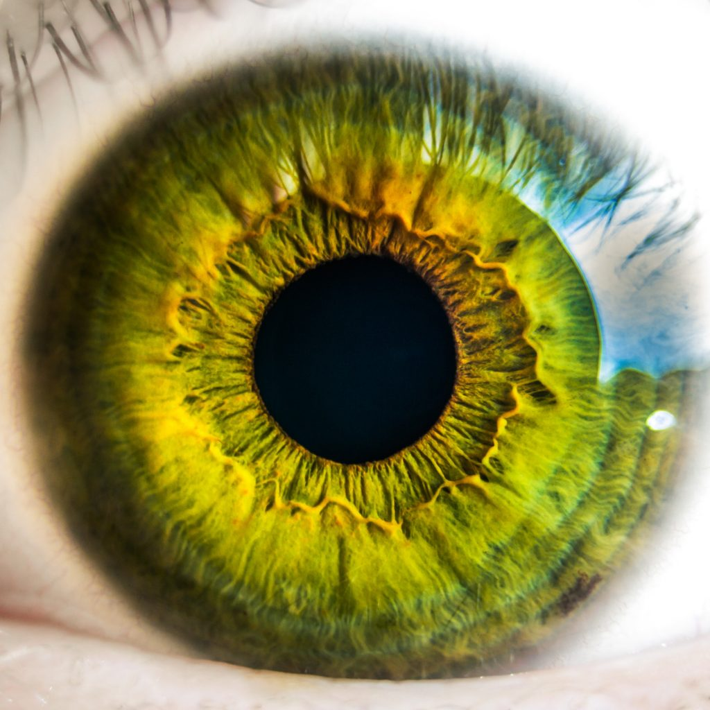 anatomy-biology-eye-8588